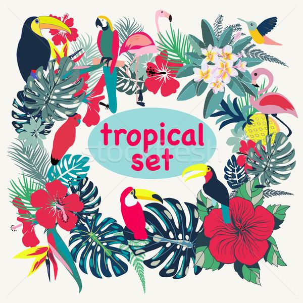 Tropicales aves hojas de palma flores vector ilustración Foto stock © Margolana