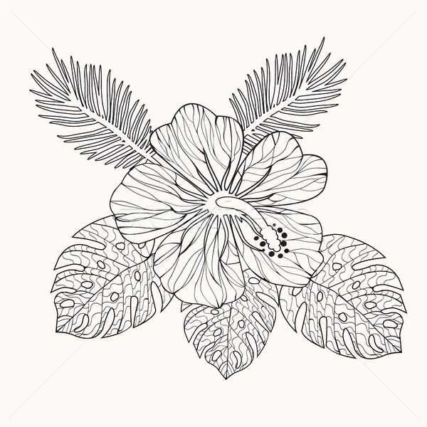 Wektora hibiscus kwiat pozostawia czarno białe Zdjęcia stock © Margolana
