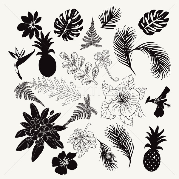 Stock photo: Vector collection of tropical plants,  leaves and flowers isolat