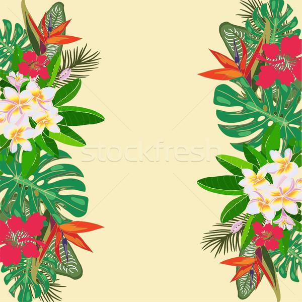 Foto stock: Tropicales · plantas · exótico · flores · hojas · aislado