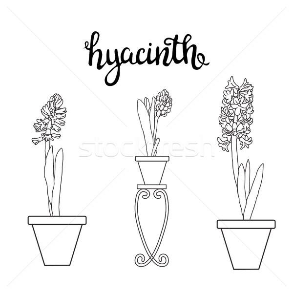スケッチ ヒヤシンス 春の花 ベクトル 図面 実例 ストックフォト © Margolana