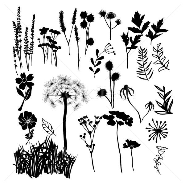 Coleção silhueta ilustração flores silvestres ervas Foto stock © Margolana