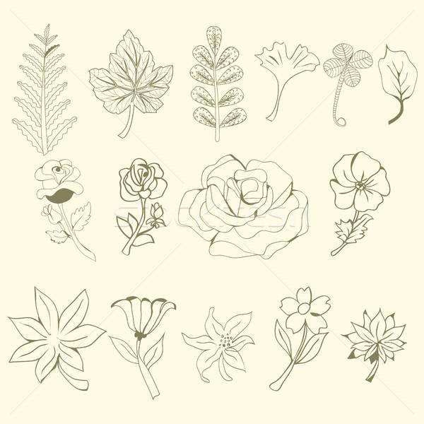 Graficzne kolekcja pozostawia kwiaty rysunek elementy Zdjęcia stock © Margolana