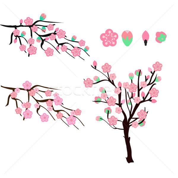 Sakura cereja isolado branco flor de cereja Foto stock © Margolana