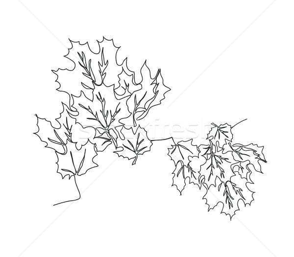 Sonbahar Akçaağaç Yaprakları Hat çizim Ağaç Vektör