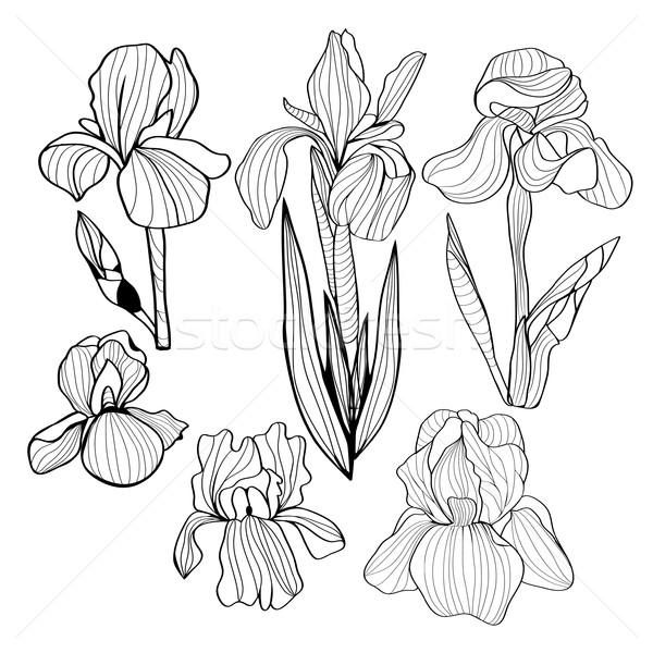 Iris цветы черно белые набор цветок Сток-фото © Margolana