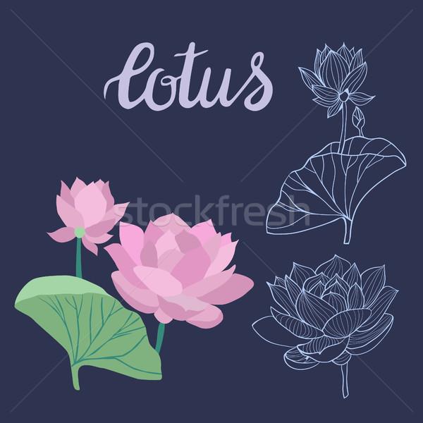 Güzel lotus çiçekler simge Stok fotoğraf © Margolana