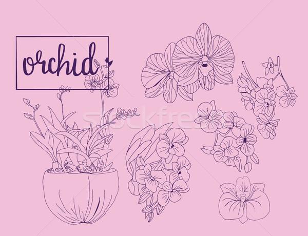 Dessinés à la main croquis ensemble orchidée fleurs graphique Photo stock © Margolana