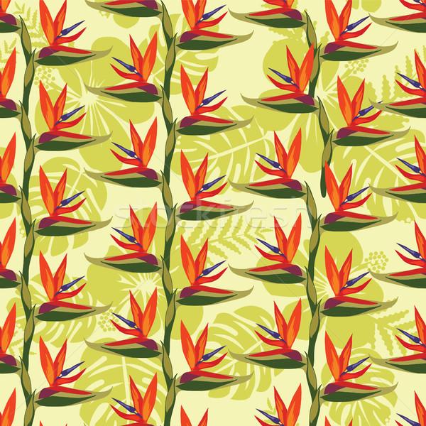 шаблон птица рай цветок тропические плана Сток-фото © Margolana