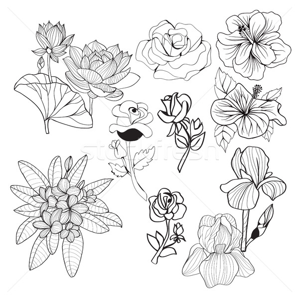 hand-drawing collection black and white flowers Monochrome illus Stock photo © Margolana