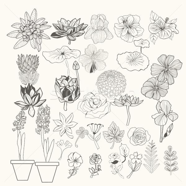 Illustrazione fiori foglie line arte Foto d'archivio © Margolana