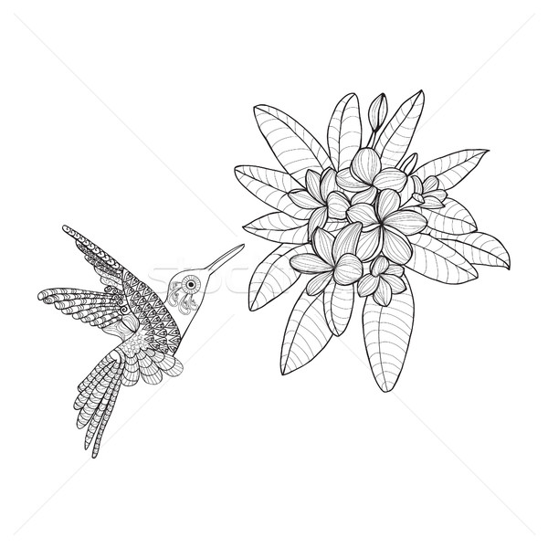 Hummingbird and Bouquet with Plumeria or Frangipani flower on Stock photo © Margolana