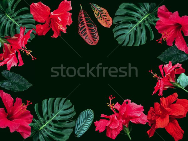 Stok fotoğraf: Romantik · doğa · çerçeve · çiçekler · yeşil · yaprak · can