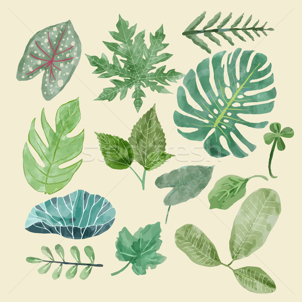 Botanical clipart Set of Green leaves, tropical plants. Stock photo © Margolana