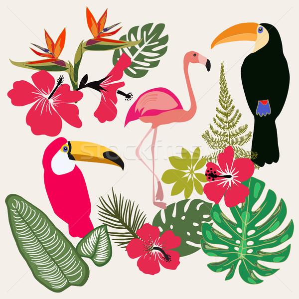 набор лет тропические графических Элементы фламинго Сток-фото © Margolana