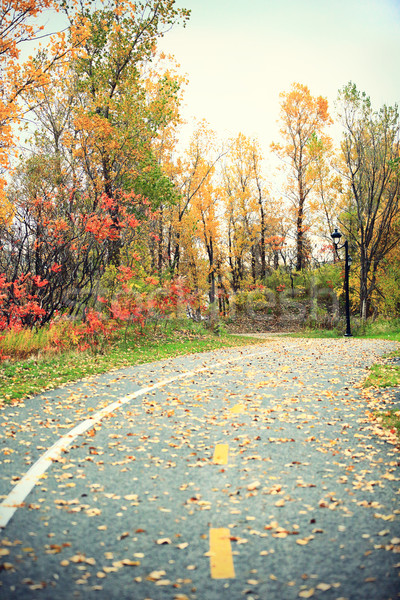 Foliage - Fall rural road with autumn leaves Stock photo © Maridav