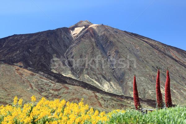 Tenerife berg vulkaan tonen bloemen landschap Stockfoto © Maridav