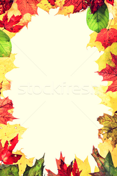 Autumn leaves frame Stock photo © Maridav