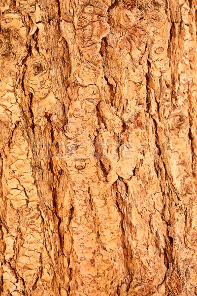 Detail of tree bark Stock photo © Maridav