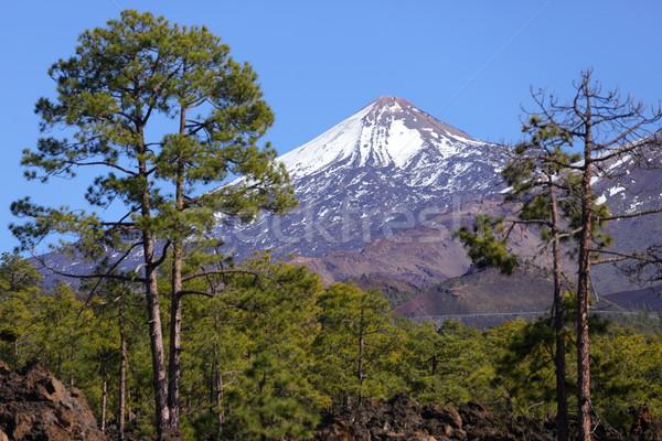 Tenerife vulkaan landschap mooie natuur landschap Stockfoto © Maridav