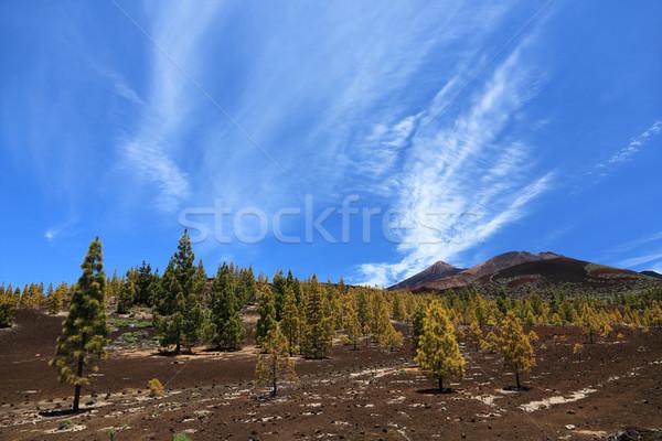 Tenerife, Teide landscape Stock photo © Maridav