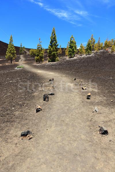 Pad wandelen tenerife parcours lege Stockfoto © Maridav
