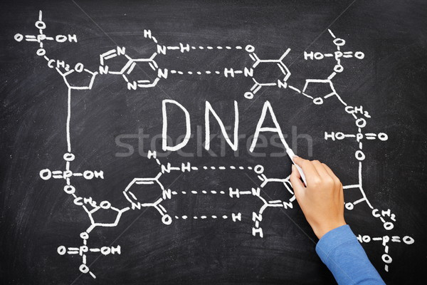 DNA blackboard drawing Stock photo © Maridav
