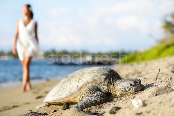 Tortue plage marche femme grand île Photo stock © Maridav