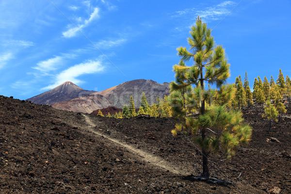 Tenerife volcano teide landscape Stock photo © Maridav