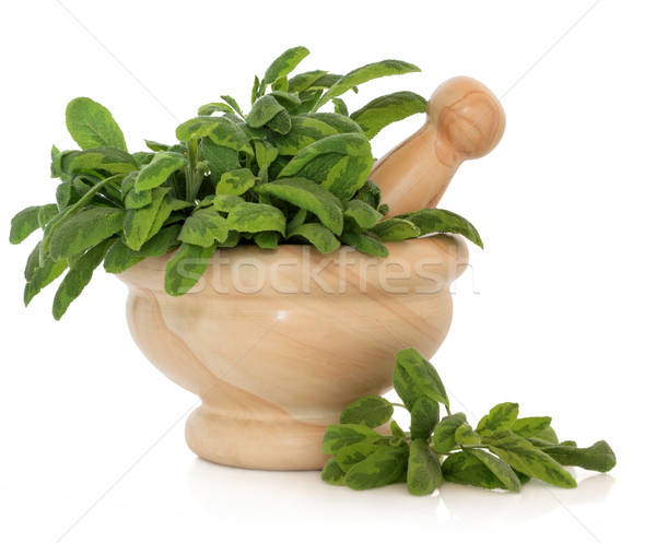 Variegated Sage Herb Stock photo © marilyna