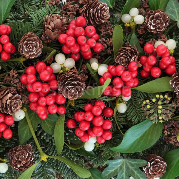 Winter flora christmas klimop maretak Blauw Stockfoto © marilyna