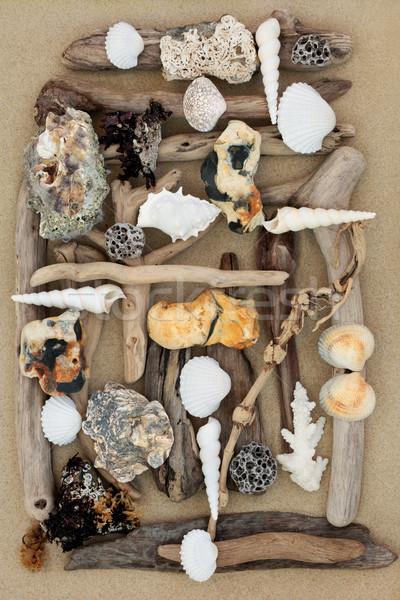 Streszczenie plaży piasek na plaży driftwood muszle skał Zdjęcia stock © marilyna