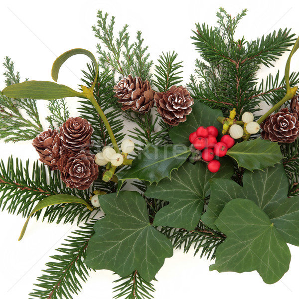 Zimą zieleń christmas kwiatowy bluszcz Zdjęcia stock © marilyna