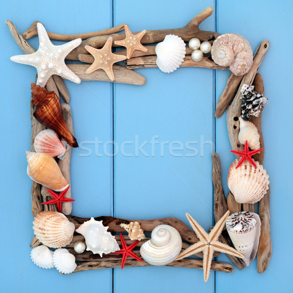 Concha beleza mar concha troncos quadro Foto stock © marilyna