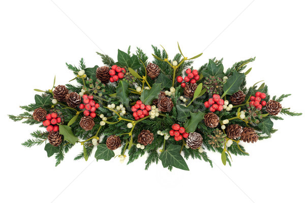 Holly and Winter Greenery  Stock photo © marilyna