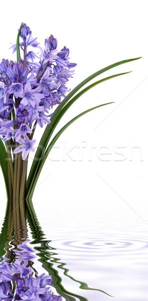 Bluebell Flowers Stock photo © marilyna