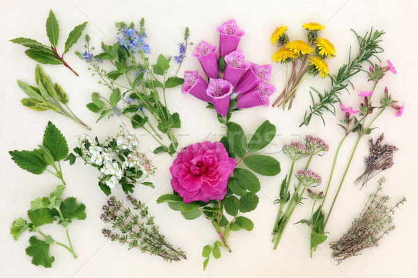 Naturopathic Herbs and Flowers Stock photo © marilyna