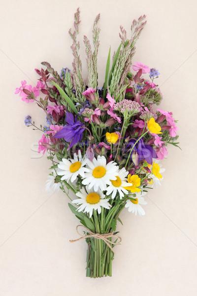 Lata dziki kwiat krem charakter Daisy Zdjęcia stock © marilyna