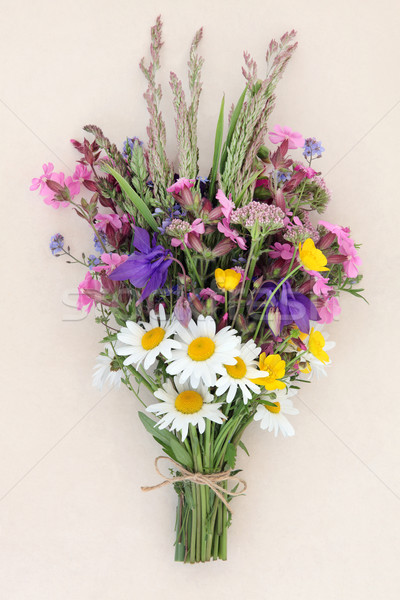 Verano flor silvestre crema naturaleza Daisy Foto stock © marilyna