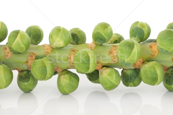 Sprouts on a Stem Stock photo © marilyna