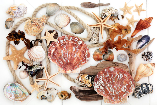 Seashell Driftwood Rock and Seaweed Collage  Stock photo © marilyna
