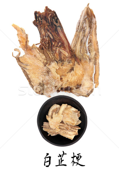 Stock photo: Angelica Herb Root