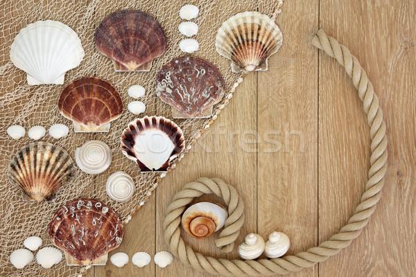 Sea Shell Abstract Stock photo © marilyna