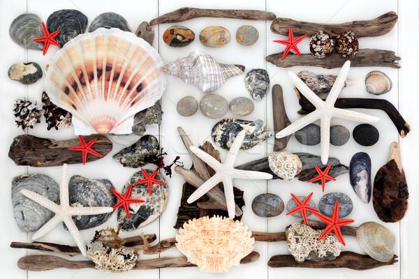 Naturalnych driftwood muszle skał streszczenie plaży Zdjęcia stock © marilyna