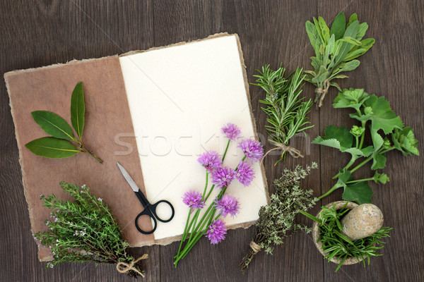 Fresh Herbs for Drying   Stock photo © marilyna