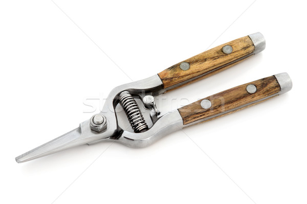 Secateurs Stock photo © marilyna