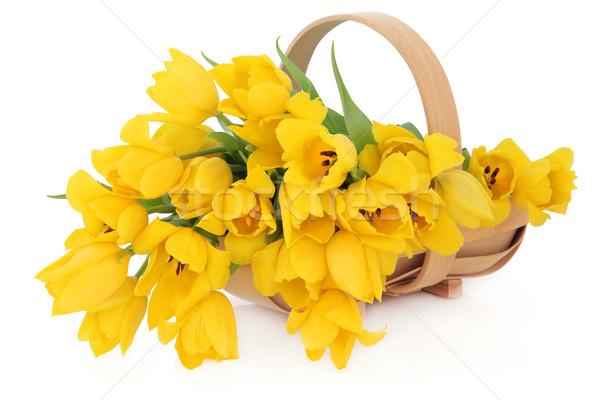 Voorjaar mand Geel tulp bloemen houten Stockfoto © marilyna