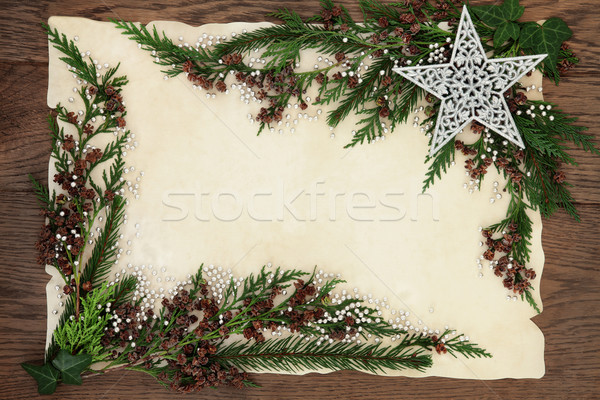 Christmas Cedar Cypress Border Stock photo © marilyna