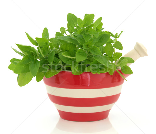 Oregano Herb Stock photo © marilyna