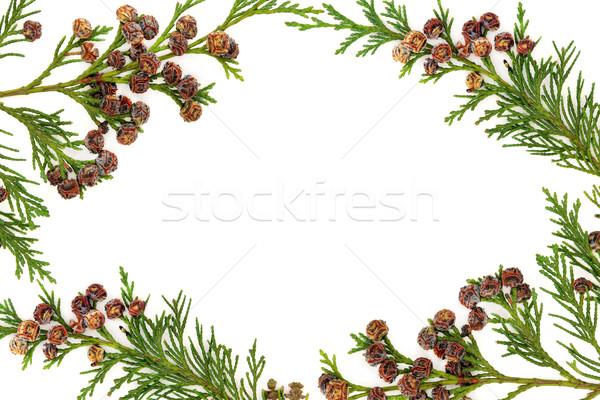 Cypress Leyland Leaf Border Stock photo © marilyna
